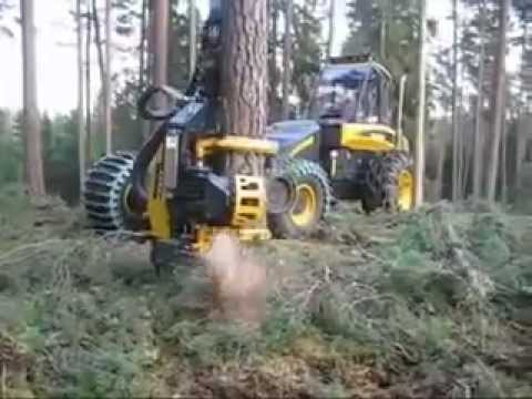 how to clean lot from forest bedding